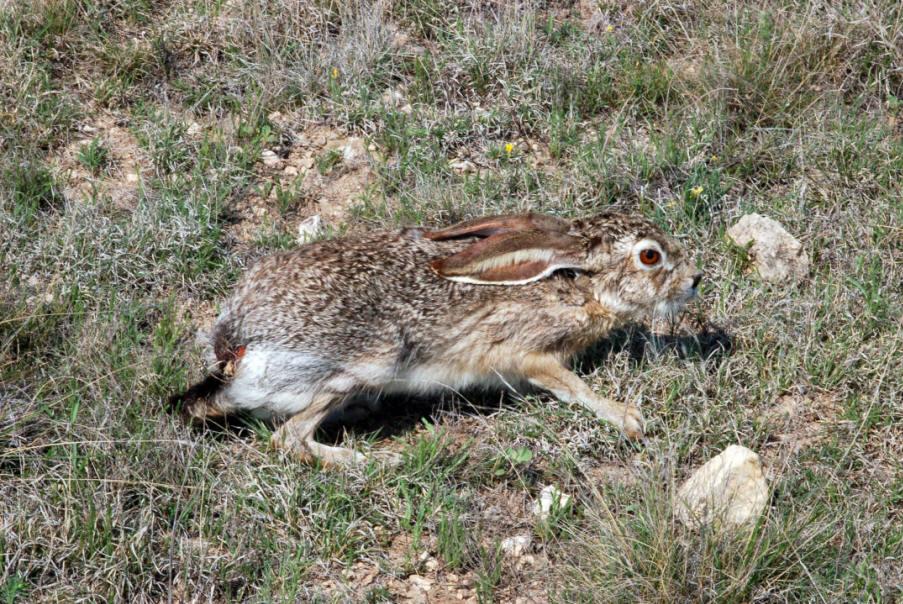 sheldon national antelope refuge